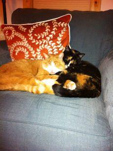 20130202-cat-snuggle